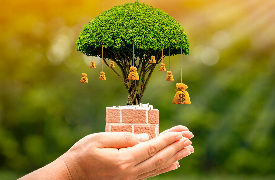 savings or term deposit, person holding growing tree