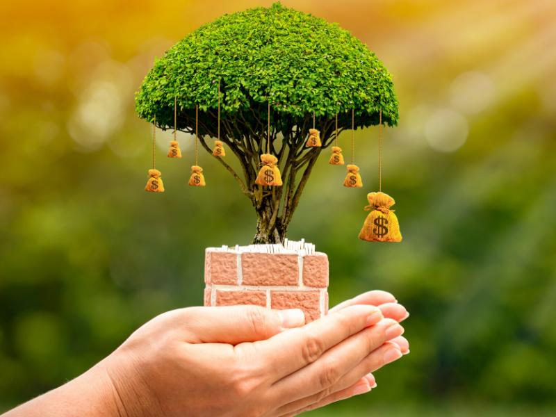 savings or term deposit, person holding growing tree